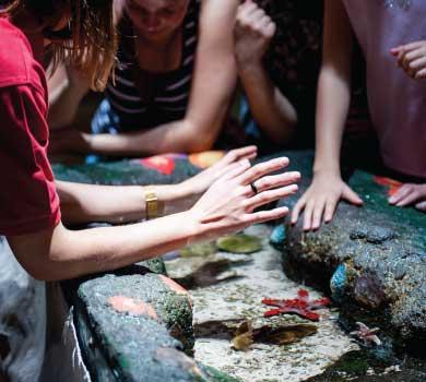kids at aquarium touch tank